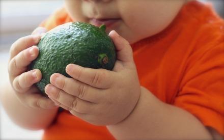 avocado-1476493_960_720